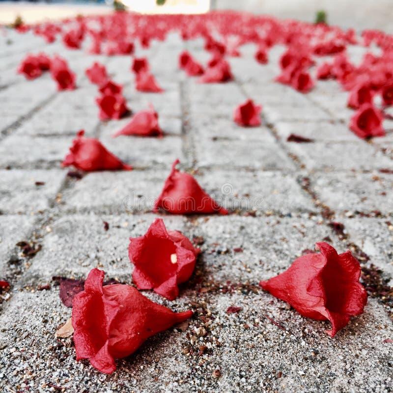 Flores vermelhas caídas imagem de stock