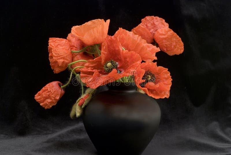 Flores vermelhas da papoila no vaso foto de stock