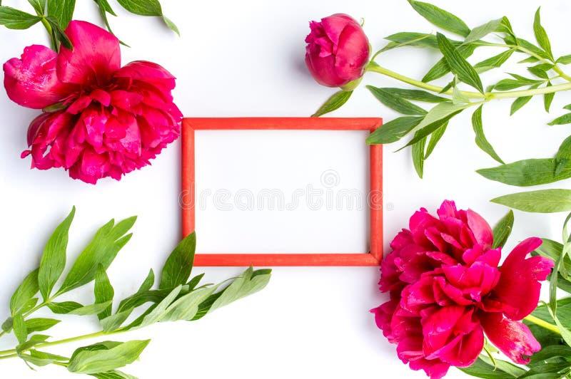 Flores vermelhas da peônia e quadro vazio da foto no branco foto de stock royalty free