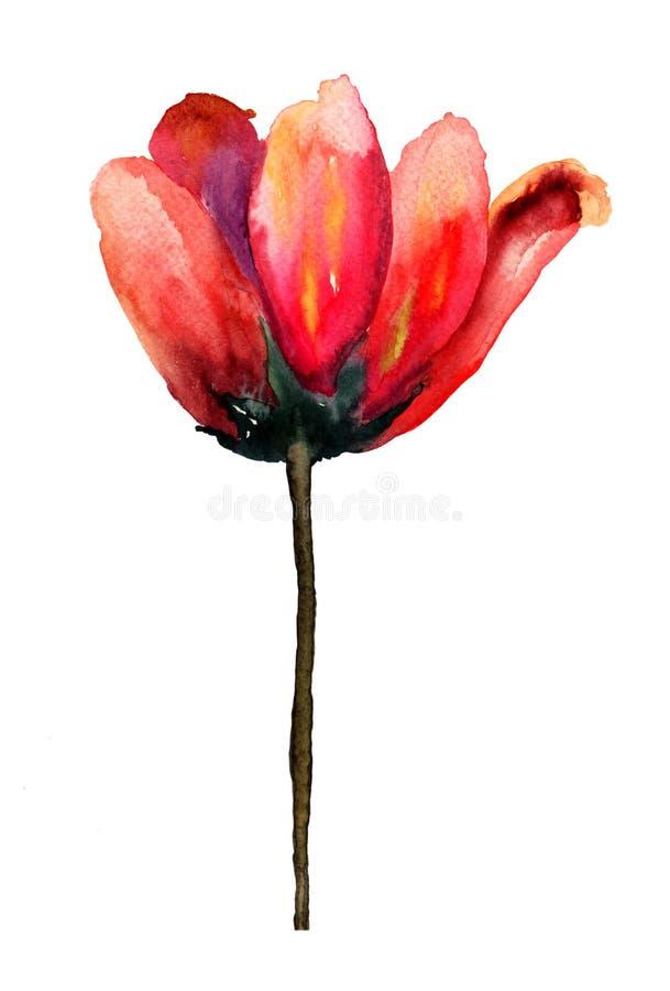 Flores Vermelhas Da Tulipa Fotografia de Stock