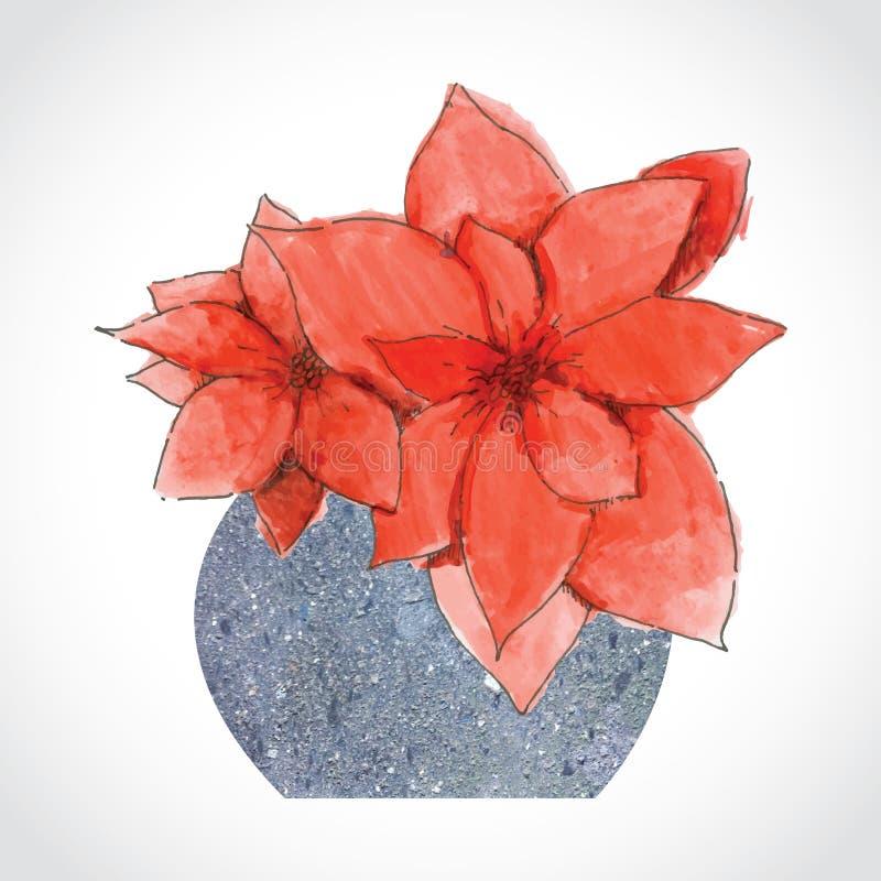 Flores vermelhas do Natal no vaso de pedra imagens de stock