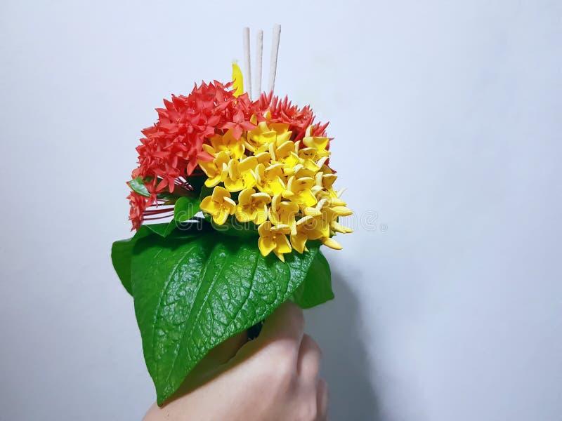 Flores vermelhas e amarelas da terra arrendada da mão de Ixora com as varas da vela e do incenso fotografia de stock royalty free
