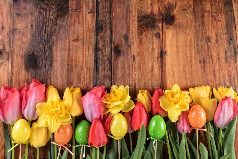 Flores vermelhas e amarelas do narciso amarelo das tulipas com os ovos da páscoa no fundo de madeira escuro fotos de stock royalty free