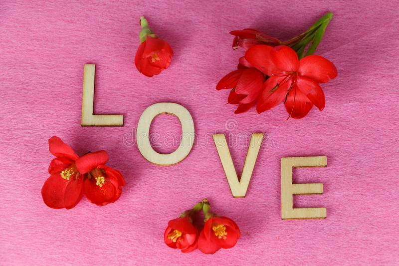 Flores vermelhas e amor fotos de stock