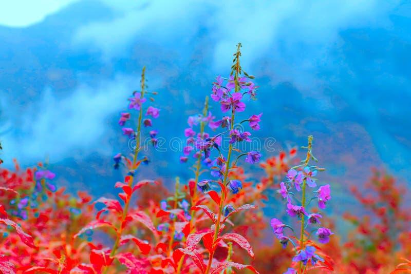 Flores vermelhas e azuis do medow do norte Flores selvagens coloridas bonitas das montanhas imagens de stock royalty free