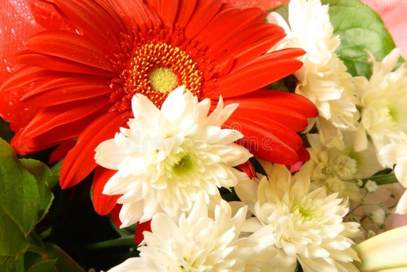 Flores vermelhas e brancas imagem de stock