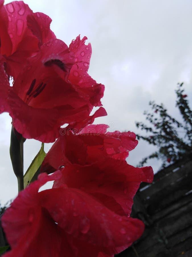 Flores vermelhas e cor-de-rosa bonitas fotos de stock