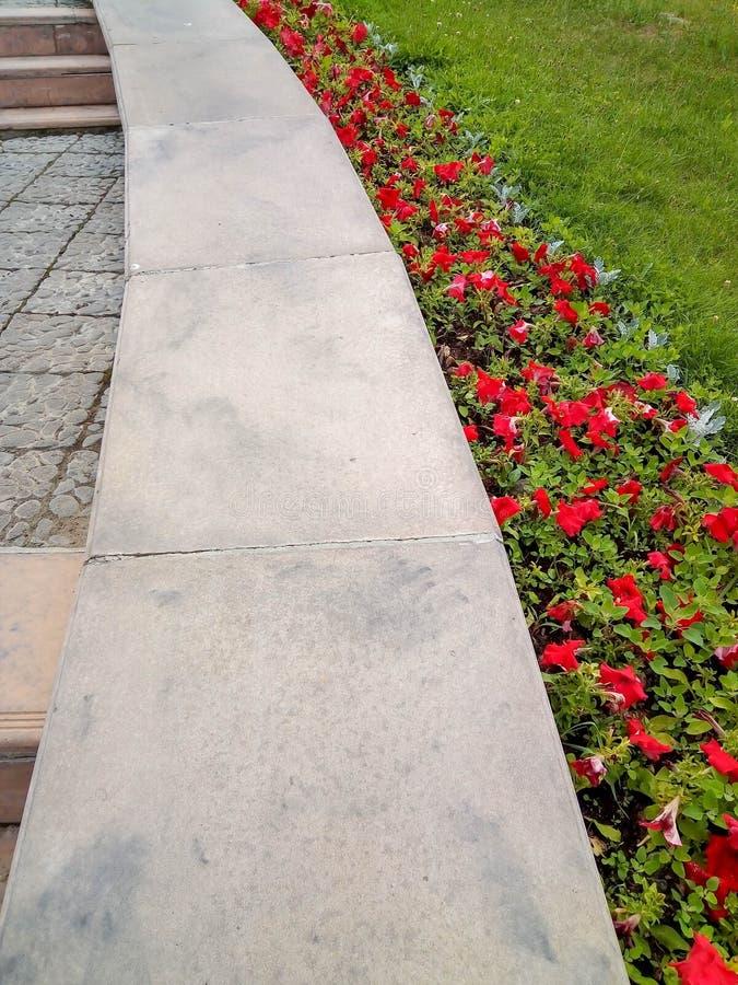 Flores vermelhas e grama verde perto das escadas imagens de stock royalty free