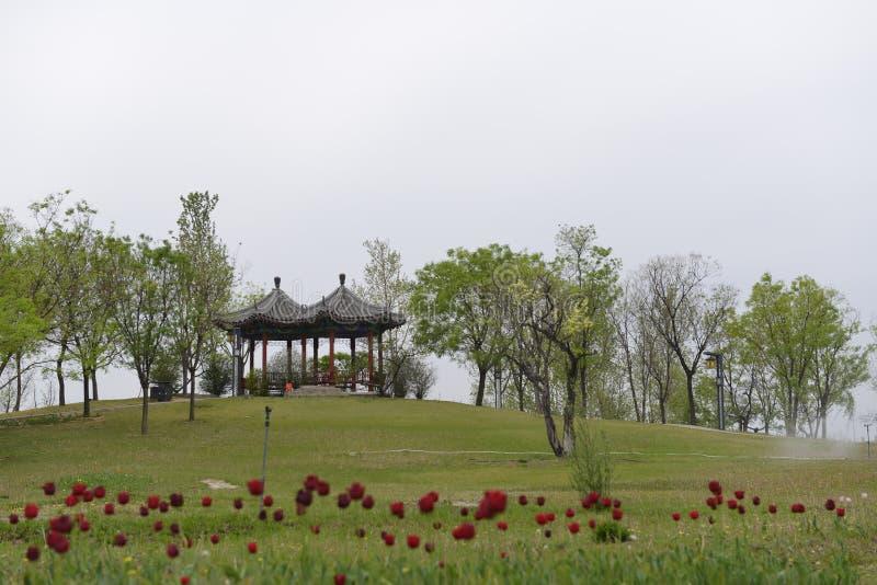 Flores vermelhas, grama verde e pavilhões imagens de stock