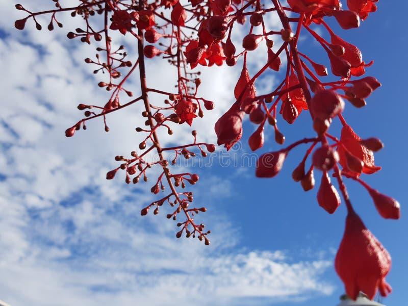 Flores vermelhas na skyline azul foto de stock