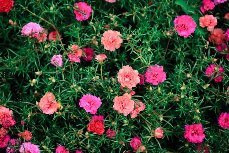 Flores vermelhas pequenas com fundo verde da opinião superior da folha foto de stock