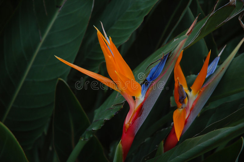 Flores vibrantes fotografia de stock royalty free