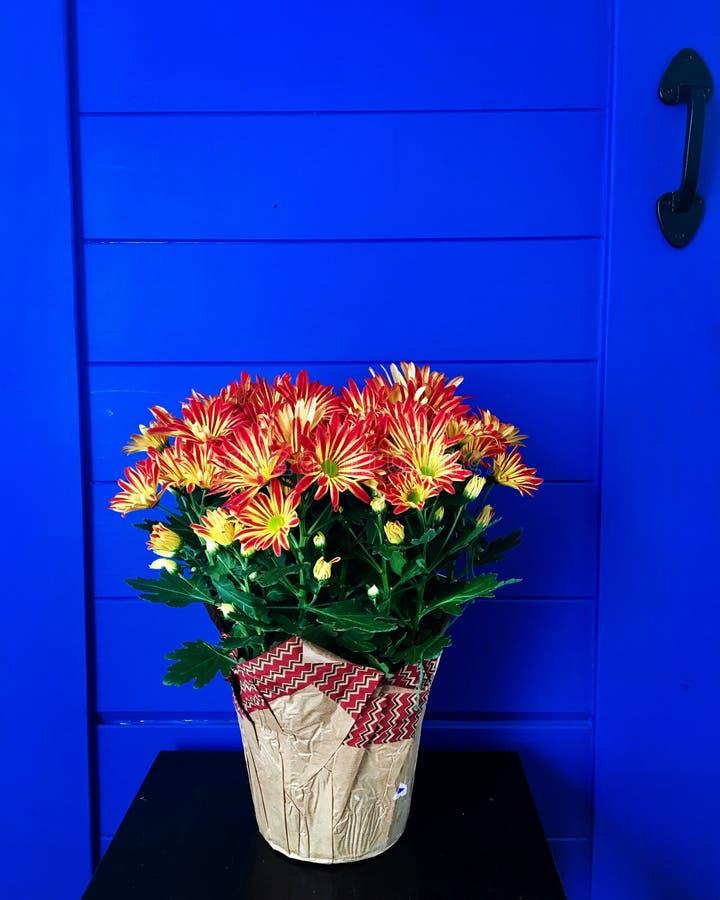 Flores vibrantes foto de archivo libre de regalías