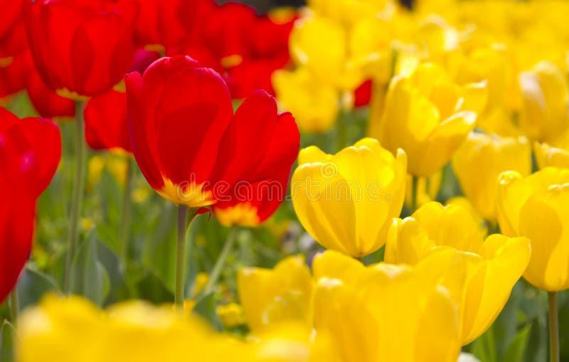 Flores vibrantes de la primavera fotografía de archivo libre de regalías