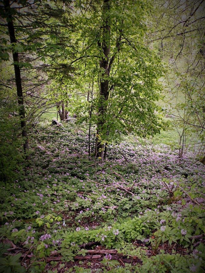 Flores violetas abajo del cuento de los árboles-fary fotografía de archivo libre de regalías