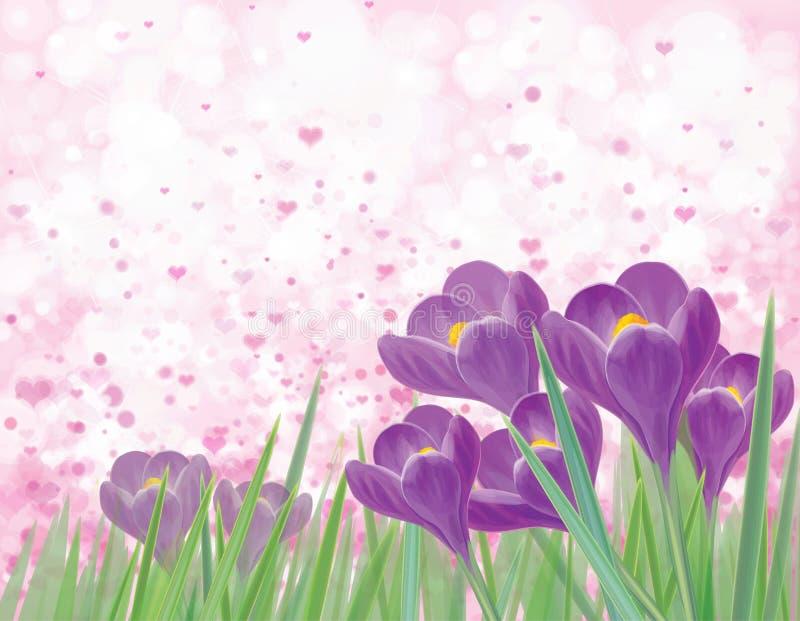Flores violetas do crocuse da mola do vetor ilustração do vetor