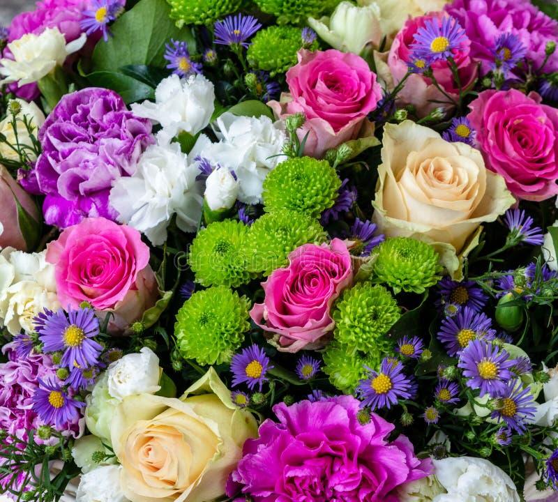 Flores violetas e verdes da rosa do vermelho das flores brancas imagem de stock
