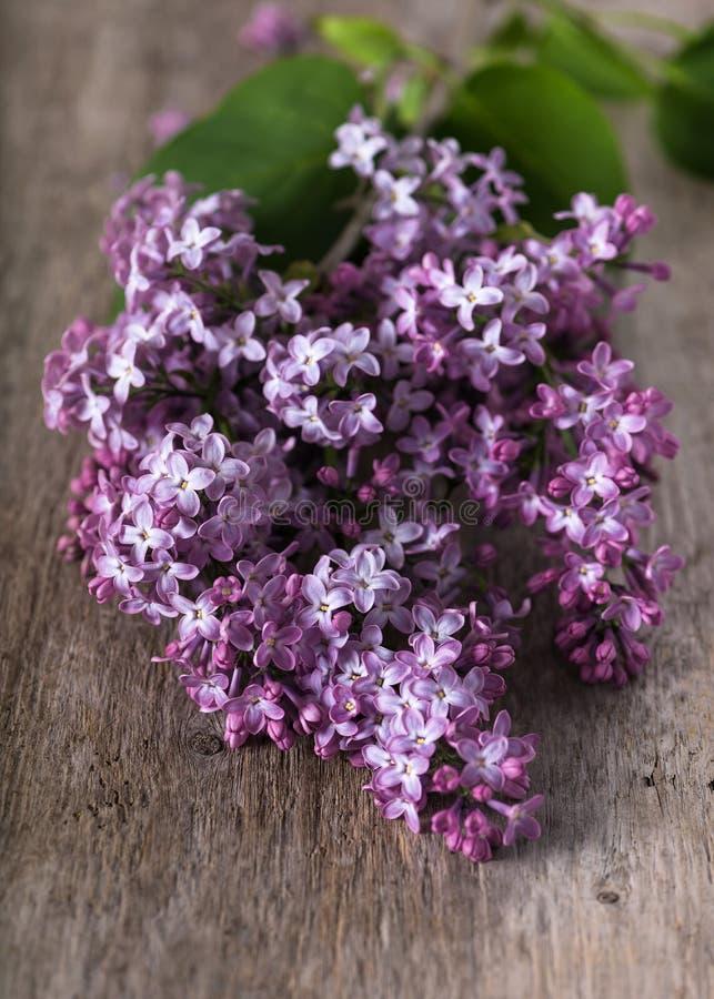 Flores violetas p?rpuras frescas hermosas de la lila fotos de archivo