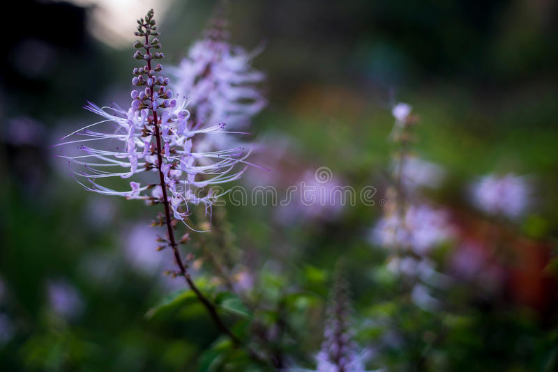 Flores violetas salvajes imagen de archivo libre de regalías