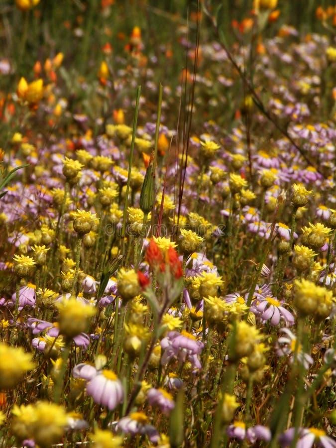 Flores - Wildflowers imagem de stock royalty free