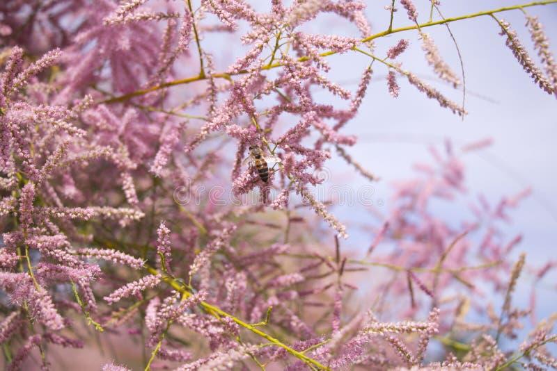 Flores y abeja foto de archivo libre de regalías
