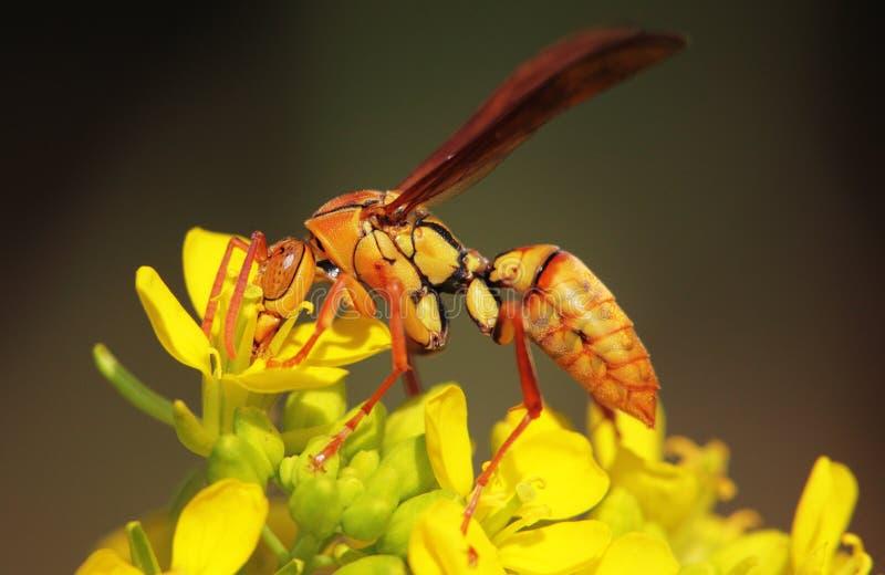 Flores y abejas imágenes de archivo libres de regalías