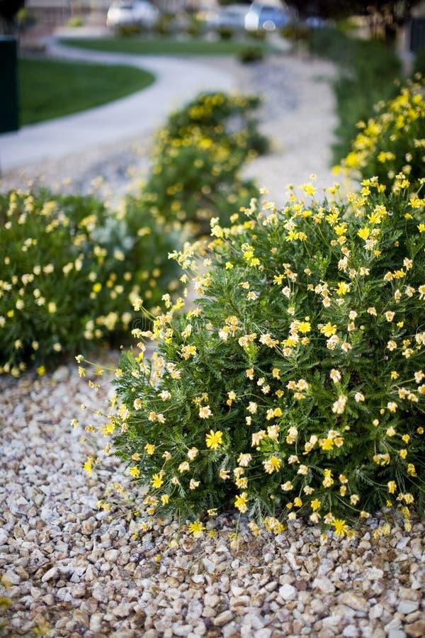 Flores y arbustos foto de archivo libre de regalías