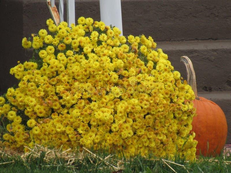 Flores y calabaza de la caída foto de archivo libre de regalías