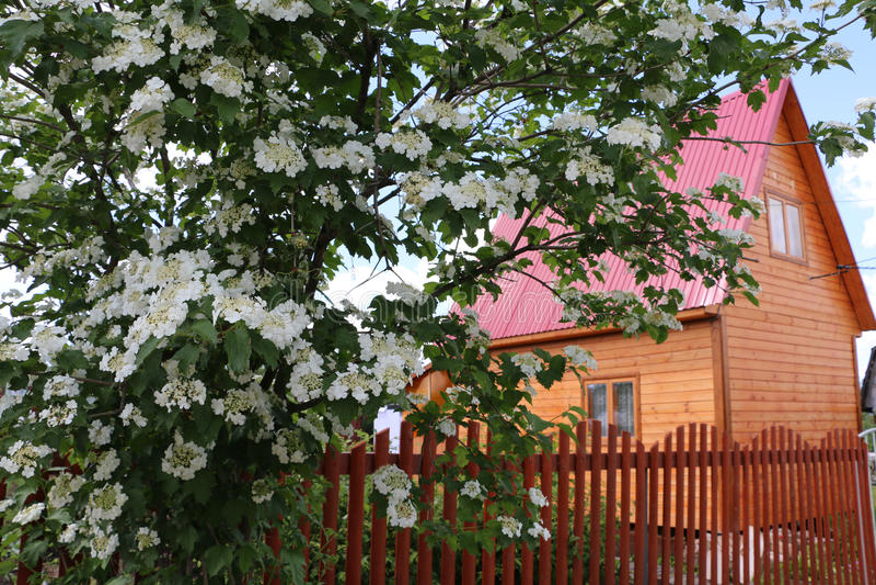 Flores y casa agradables en pueblo fotos de archivo