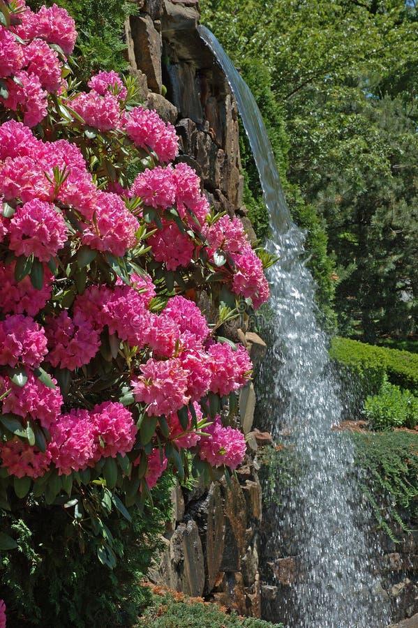 Flores Y Cascada Del Parque Fotos de archivo