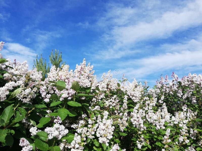 Flores y cielo azul fotos de archivo