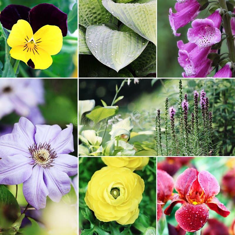 Flores y collage de las plantas foto de archivo libre de regalías
