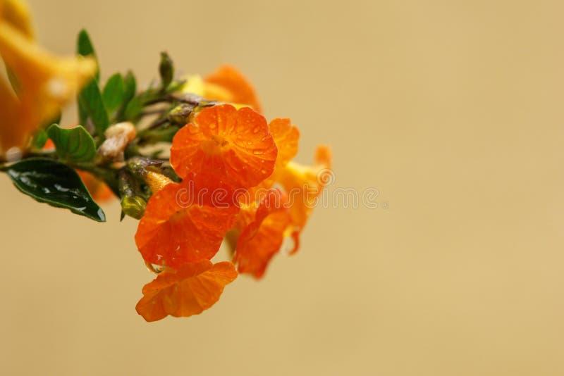 Download Flores y descensos foto de archivo. Imagen de gotas - 100526106