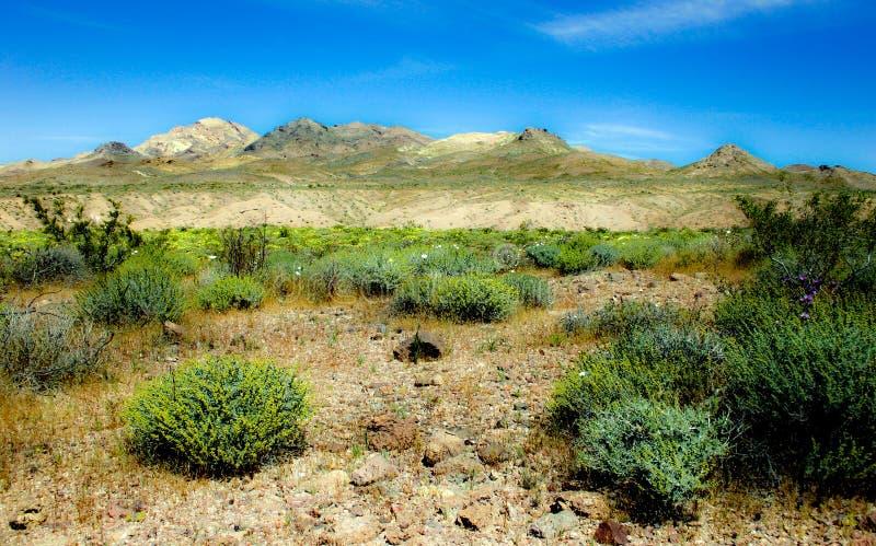 Flores y desierto imágenes de archivo libres de regalías