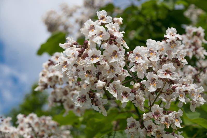 Flores y hoja de los árboles del verano del escarabajo fotografía de archivo libre de regalías
