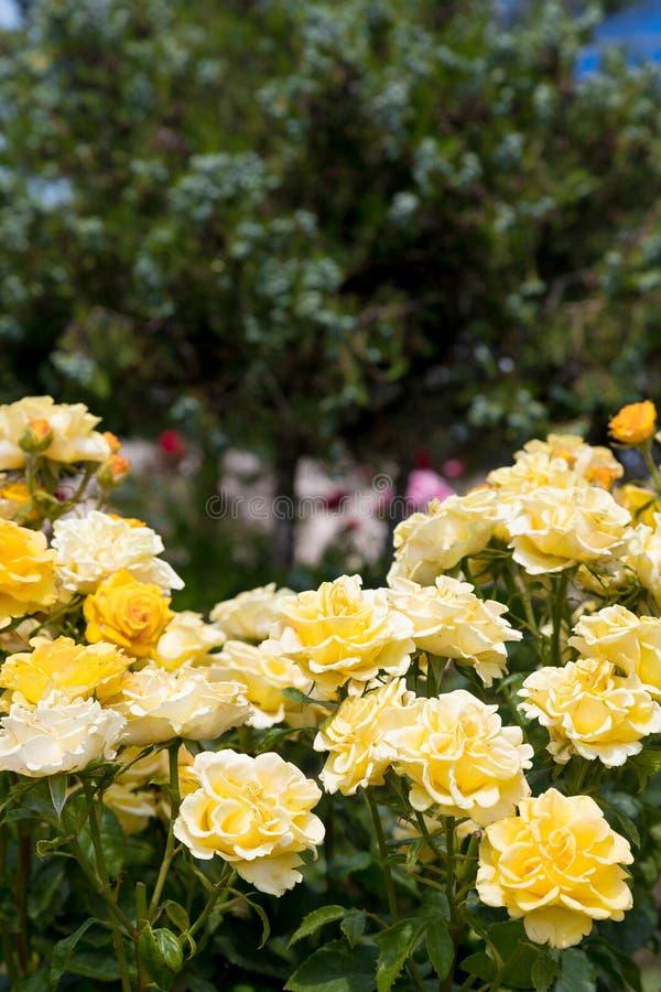 Flores y hoja de los árboles del verano del escarabajo imagen de archivo libre de regalías