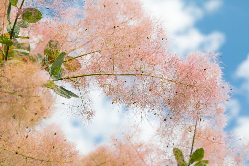 Flores y hoja de los árboles del verano del escarabajo fotografía de archivo