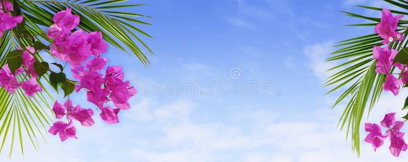 Flores y hojas de palma de la buganvilla en un arreglo tropical en el cielo azul fotografía de archivo libre de regalías