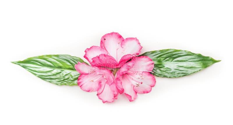Flores Y Hojas Del Verde Adorno Floral En El Fondo Blanco Imagen de