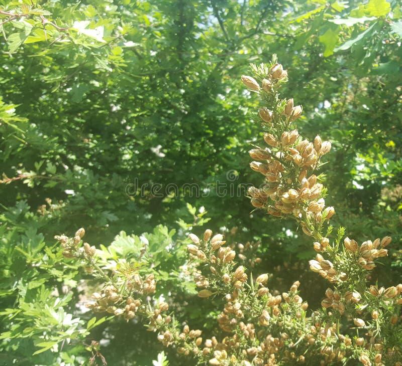 Flores y hojas en el árbol La belleza en naturaleza fotografía de archivo
