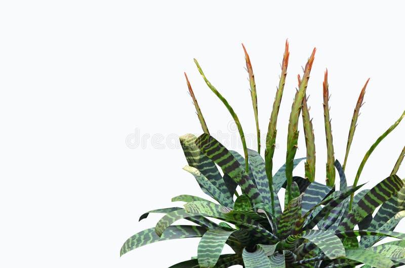 Flores y hojas hermosas del árbol de la bromelia imagen de archivo libre de regalías