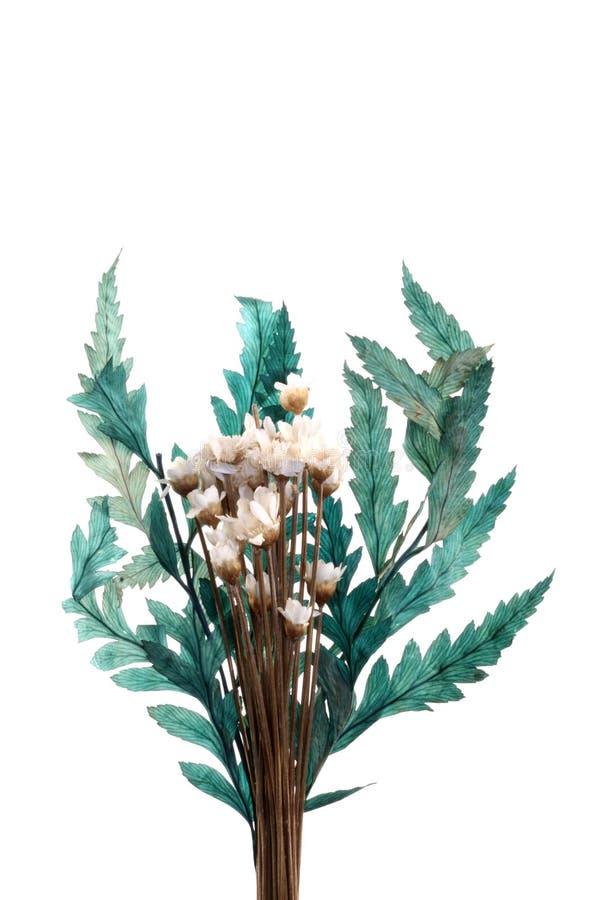 Flores y hojas micro imagenes de archivo