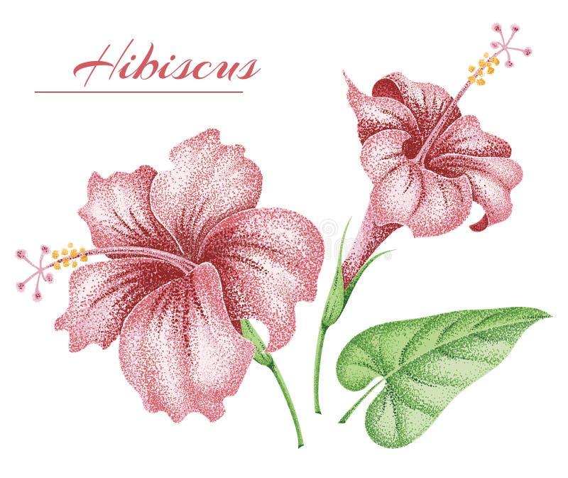 Flores y hojas tropicales hibisco stock de ilustración