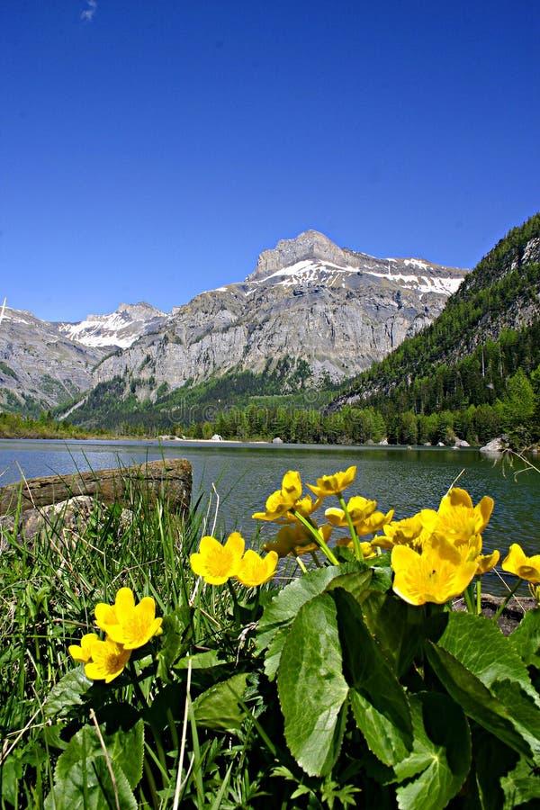 Flores y lago de la montaña imagen de archivo