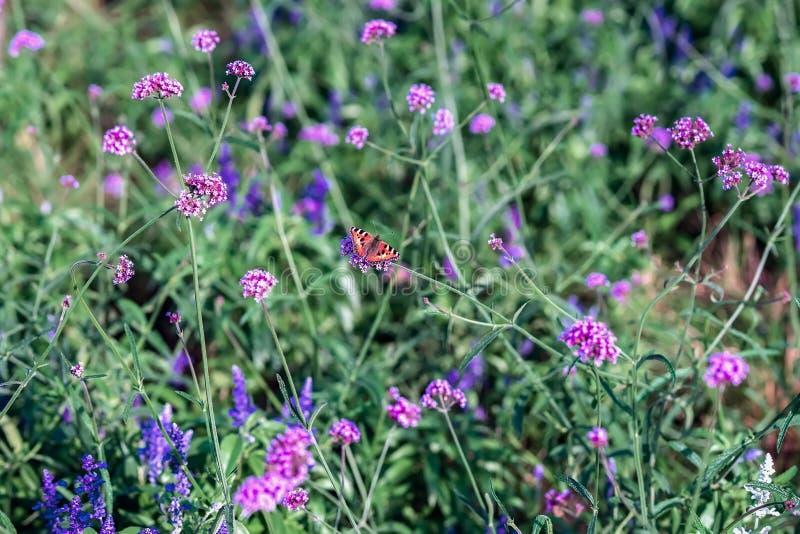 Flores y mariposa brillantes salvajes, prado en el verano, día soleado Fondo colorido pintoresco fotos de archivo libres de regalías