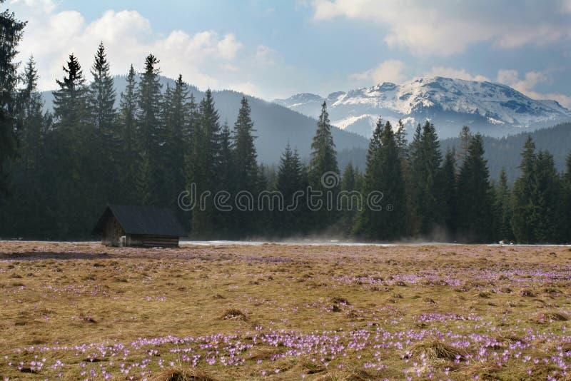Flores y montaña foto de archivo libre de regalías
