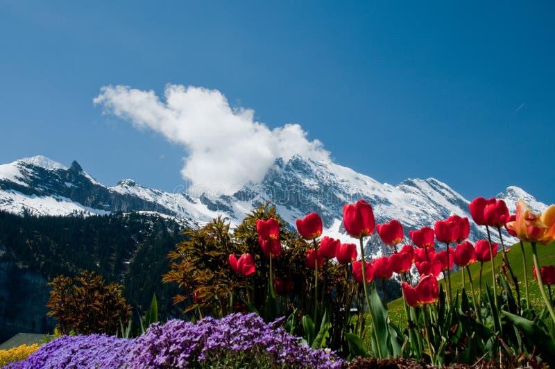 Flores y montañas fotografía de archivo