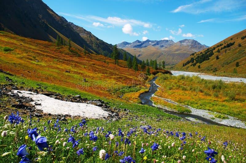 Flores y montañas hermosas. fotos de archivo libres de regalías