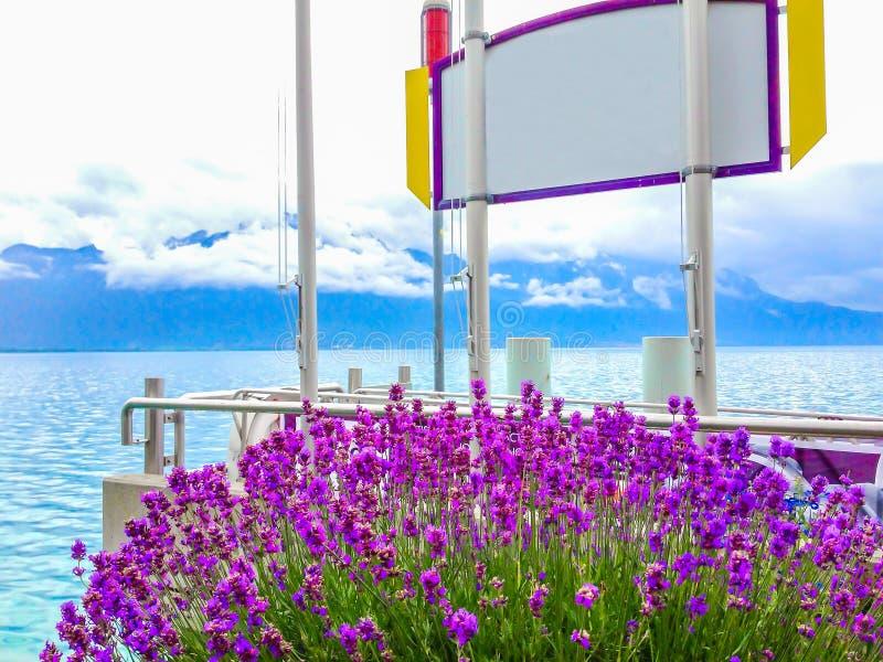 Flores y muestra en blanco blanca con el marco púrpura, fondo con el lago hermoso borroso y fondo de la isla imagen de archivo libre de regalías