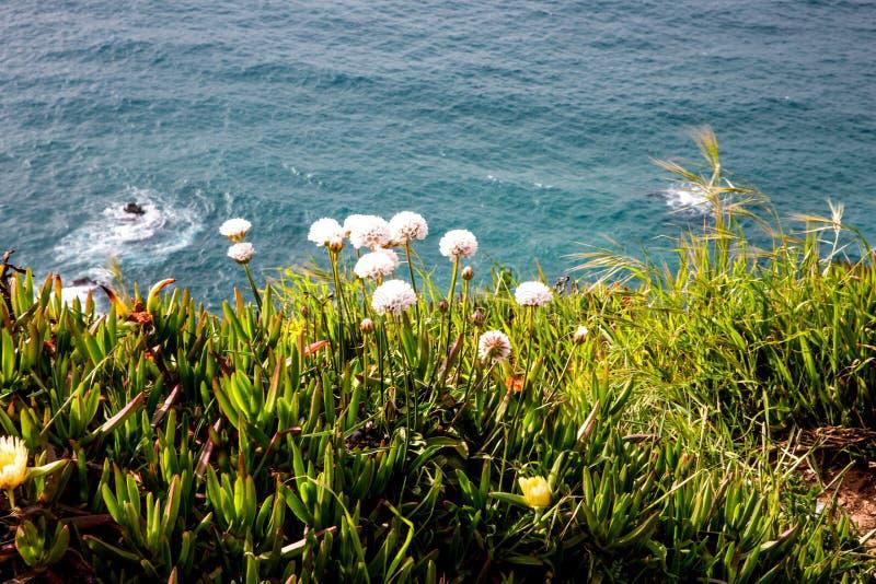 Flores y océano combinados fotografía de archivo libre de regalías
